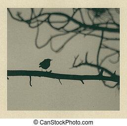 Little Bird Blown - A little bird sitting on a tree branch...