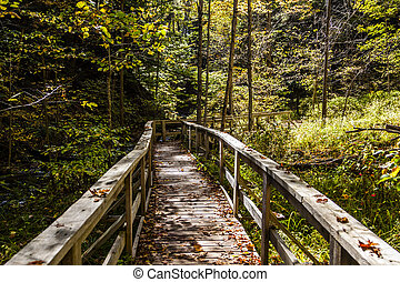 Boardwalk through Forested Area