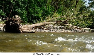 Knocked down a tree on the riverban - Tree on the bank of...