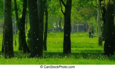 Spring or summer snow - Park in the Zagreb - Spring or...