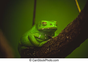 green frog sleeping on branch