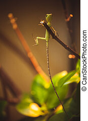 green lizard with long tail on branch