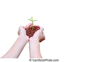 Hands holding green small plant Business growth and new life...