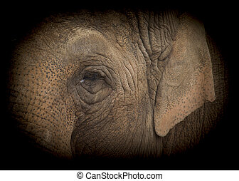 Elephant low key - Elephant very close up low key shot
