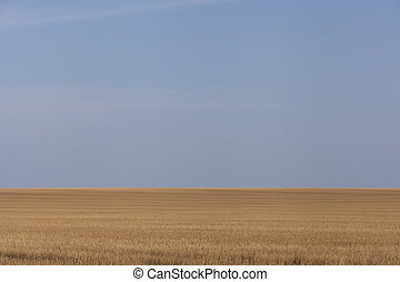 Wheatfield background 3 - Wheatfield and blue sky background
