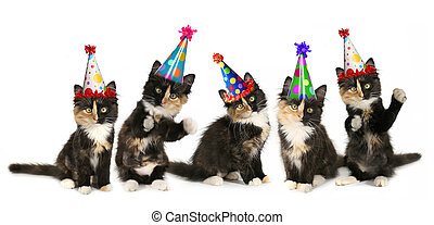 5 Kittens on a White Background With Birthday Hats - Kittens...