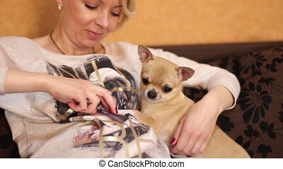 Chihuahua dog and pregnant woman - Chihuahua forepaws relies...