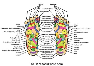 Acupuncture,Foot Scheme -Indonesia - scheme of foot...