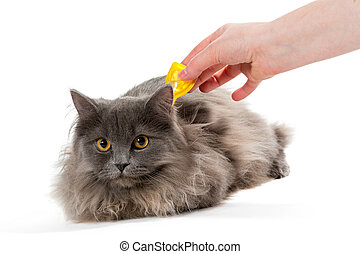 Protect the cat from ticks and fleas, isolated on white...