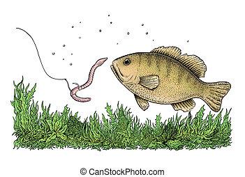 pesca, Ilustração,