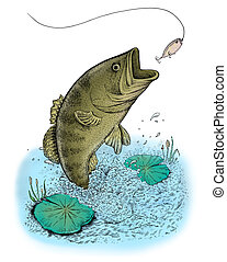 Largemouth Bass jumping out of water. Raster illustration