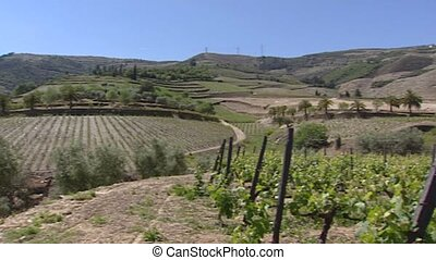 Alto Douro Wine Region pan terraced vineyards and olive...