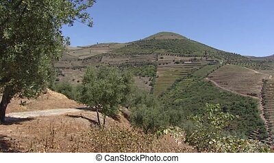 Alto Douro Wine Region pan terraced vineyards along the...