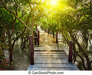 Wooden bridge in flooded rain forest jungle of mangrove...