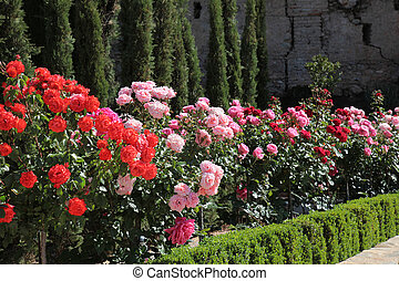 Rose Garden Alhambra Granada - the rose garden in the Alta...