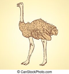 Sketch cute ostrich in vintage style, vector