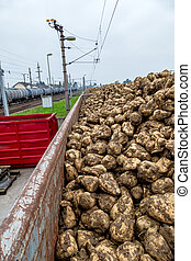 sugar beet and freight train symbol of harvest, logistics,...