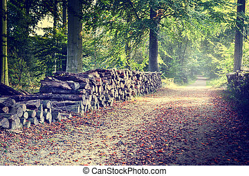 Footpath in autumn forest - Footpath with log piles on the...