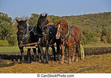 cavalos, puxando, Um, arado,