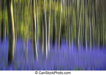 Stunning bluebell flowers in Spring - Beautiful landscape of...