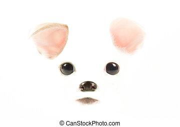 eyes ears and mouth with a puppy on a white background