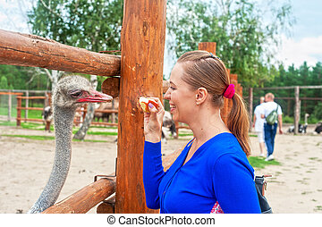 feeding ostrich  - Young attractive woman feeding ostrich