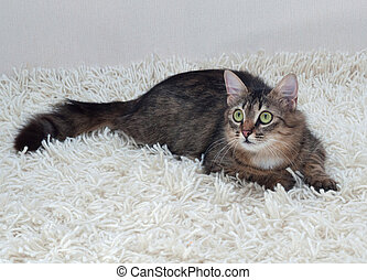 Tabby cat with green eyes on carpet - Tabby cat with green...