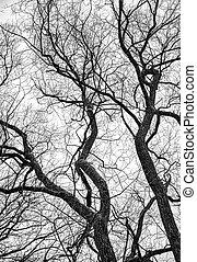 negro, y, blanco, árbol,