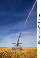 Wheat field irrigation