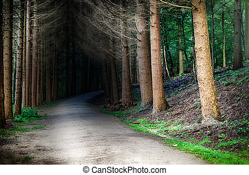 Forest footpath at sunset