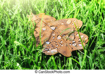 Closeup of oak leaf on green grass