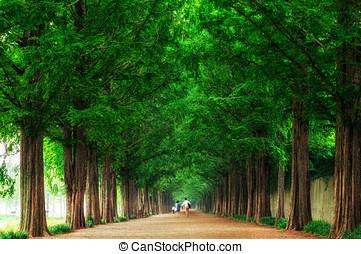 Lovers walking down metasequoia road