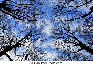 Tree branches and sky