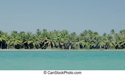 Sea shore with palms and clear blue water