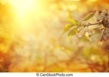 view on leaves of blossoming cherry tree blurred sunny...