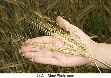 Ear on a palm