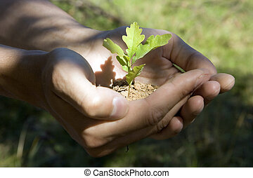 oak - Sprout of an oak tree in man\'s hands