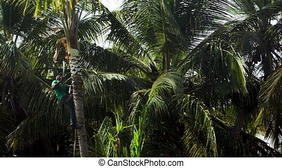 Man on the palm cutting down its branches