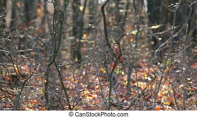 Cobwebs on the forest