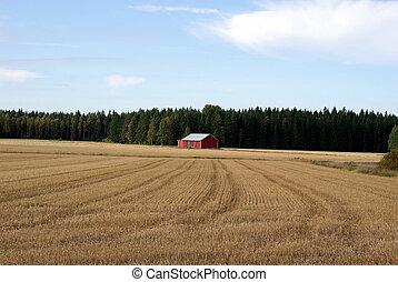 Harvested Grain Field - Harvested grain field and a red farm...