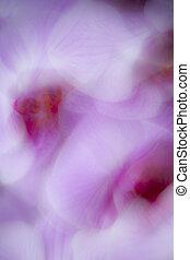 Orchideacute;e papillon - Phalaenopsis