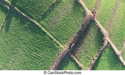 Flying Over the Agricultural Green Fields