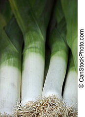fresh healthy leek on display in a market