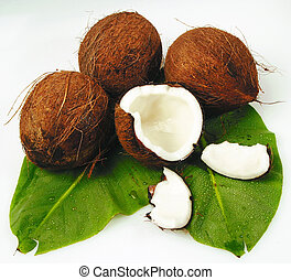 coconut - any tropical coconuts on green palm leaf