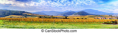 Landscape with autumn vineyards of wine route France, Alsace...