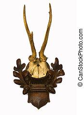 Roe deer antlers - Roe deer antlers, a rare trophy for any...
