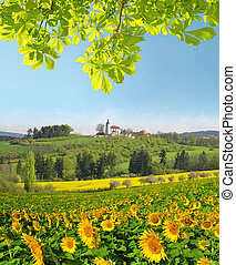 Spring landscape with sunflower field in Czech Republic