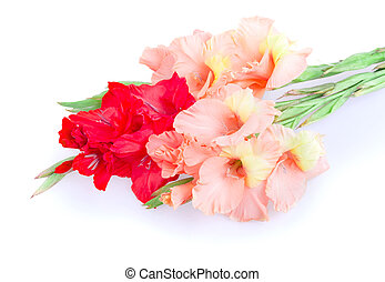 gladiolus flower isolated on white background