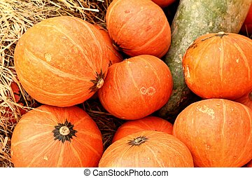 Pumpkins - pumpkin in a pumpkin patch and hay