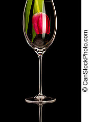 Red tulip in a wine glass on the black glass table